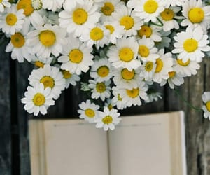 aesthetic, bouquet, and daisies image