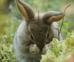 animals, april, and bunny rabbit image