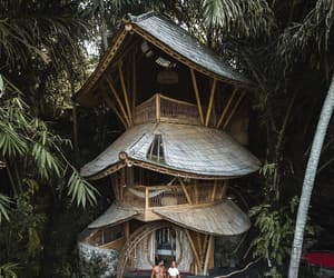 bamboo and treehouse image