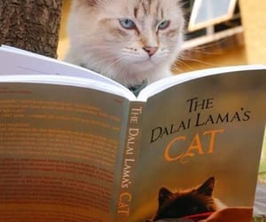 books, cat, and reading image