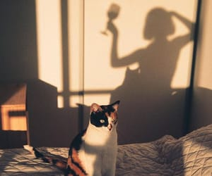 cat, shadow, and wine image