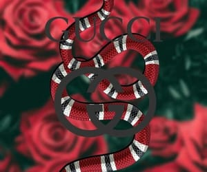 background, gucci, and red image