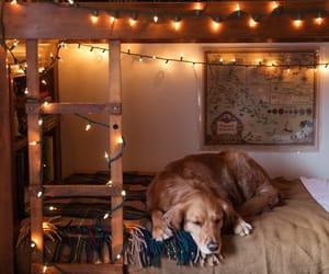 decoration, cozy, and dog image