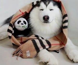 adorable, animals, and panda image