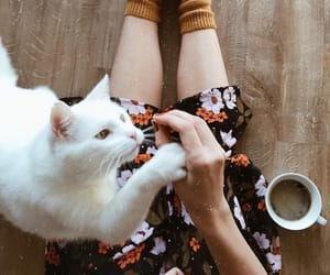 baby, beautiful, and cat image