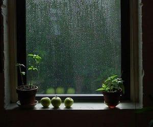 rain, window, and green image