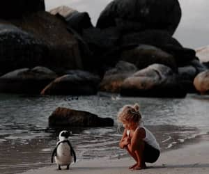 beach, cute, and penguin image