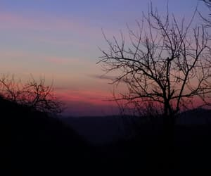 nature, wildlife, and sunset image