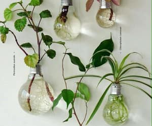 plants, diy, and nature image