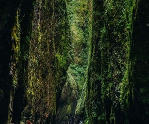 green, natura, and verde image