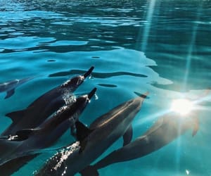 dolphin and animals image