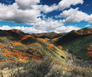 california, poppies, and love image