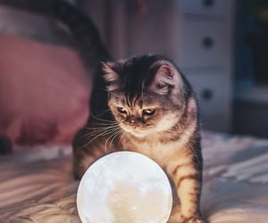 animal, ball, and cat image