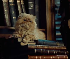 harry potter, cat, and hogwarts image