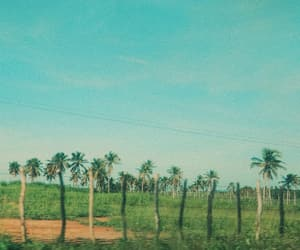 brazil, green, and photography image