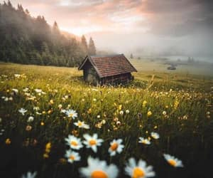 cabin, daisies, and daisy image