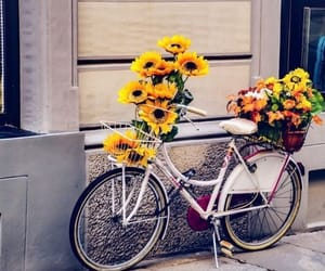 bicycle and sunflowers image