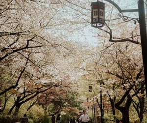 beautiful, cherry blossoms, and explore image