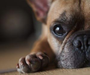 canine, dog, and pet image