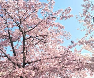 blossom trees are beautiful