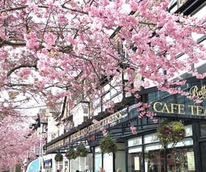 aesthetic, blossom, and cafe image