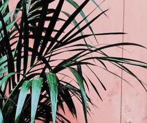 nature, pink, and plant image