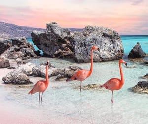 beach, dreamy, and flamingos image