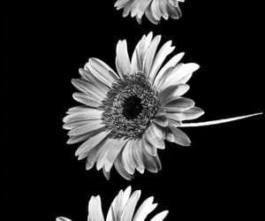 black, dark, and flowers image