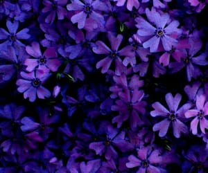 flowers, backgrounds, and purple image