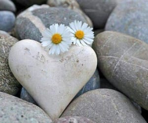 heart, daisy, and flowers image