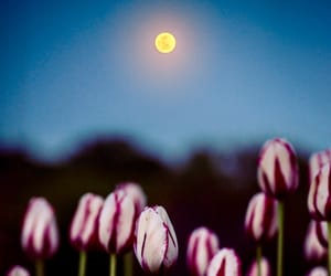 beautiful, full moon, and meadow image