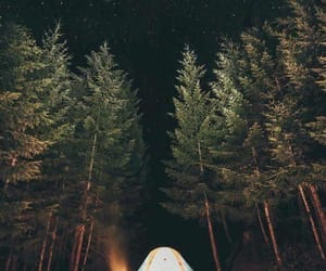 camp, forest, and wanderlost image