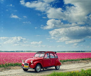 car, sky, and flowers image