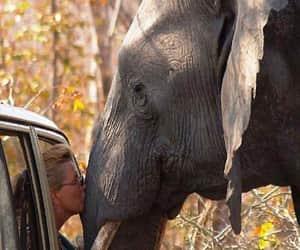 adventure, elephant, and goals image