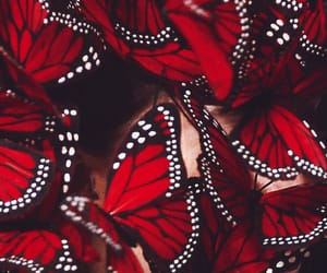 butterfly, red, and pretty image