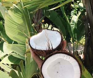 coconut, theme, and food image