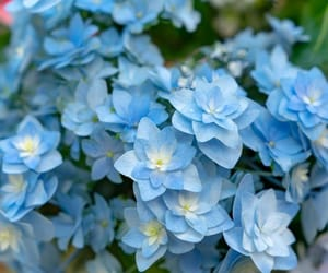 blue, flora, and flowers image