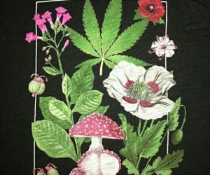 high, weed, and art image
