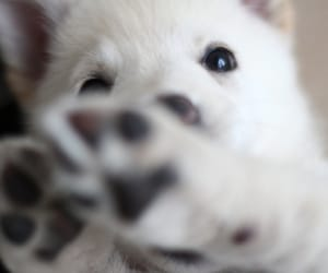 animals, dogs, and white dogs image