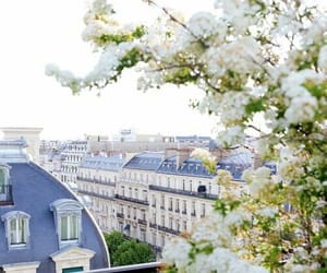 paris, city, and flowers image