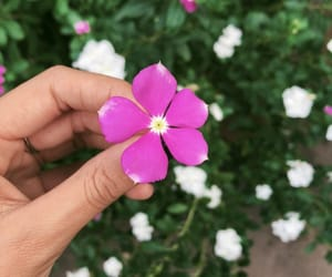 flowers and bom dia image