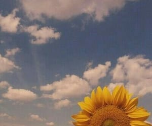 sunflower, aesthetic, and yellow image