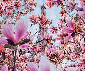 flowers, paris, and nature image