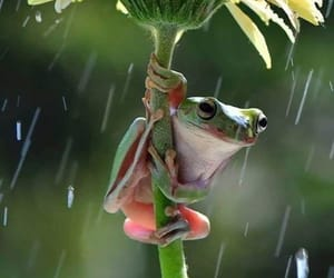 animal, flowers, and frog image