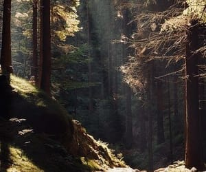 day, forest, and landscape image