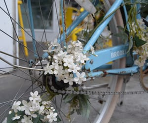 blue, flowers, and bicycle image