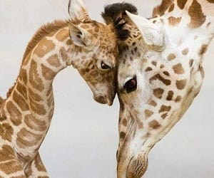 giraffe, animal, and baby image