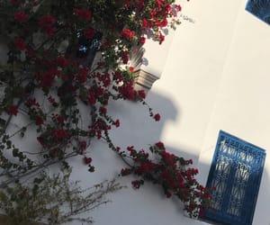 roses, tunisia, and sidibousaid image