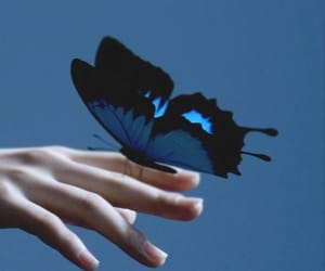 butterfly, blue, and kpop image