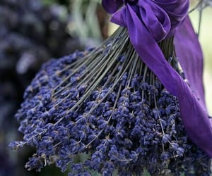 belleza, flores, and lavanda image